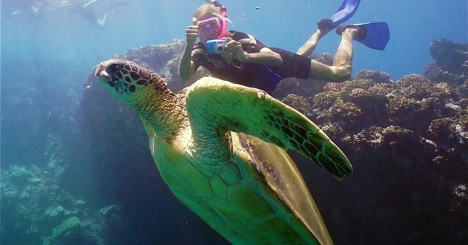 snorkle turtle